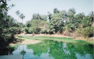 Sacred Forest of Makasutu