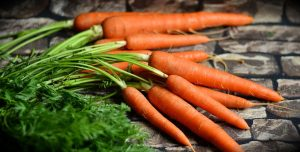 Fresh carrots with green tops