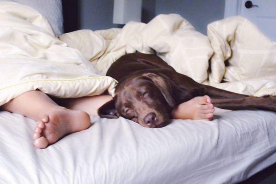 dog asleep while lying on owners feet